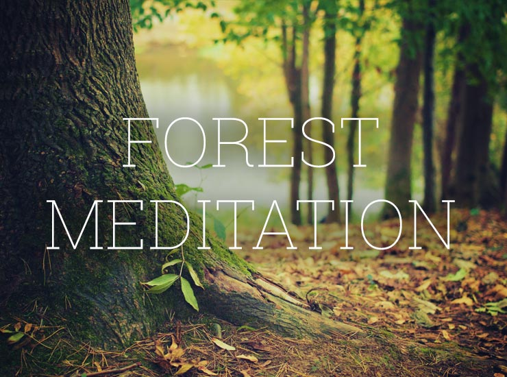 Forest Meditation - Royalty-Free Music