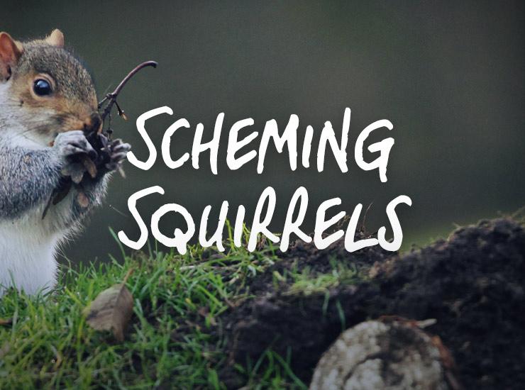 Scheming Squirrels