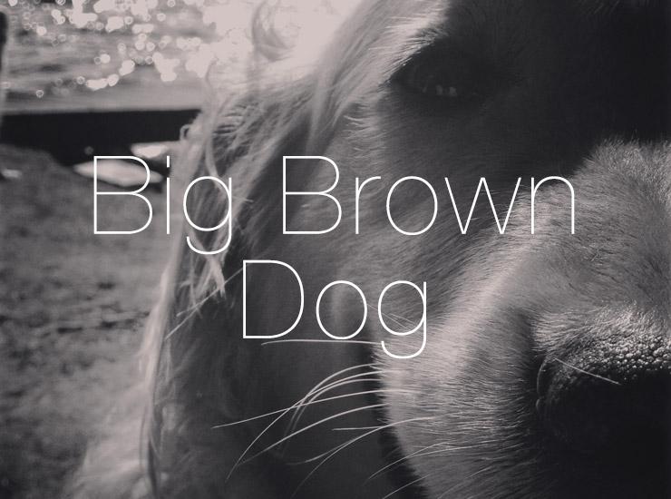 Big Brown Dog